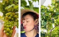 Mê tít giàn nho trĩu quả trên sân thượng 20m2 của mẹ đảm Sài Gòn