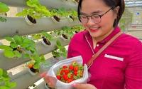 Bình Thuận: Kỹ sư bỏ việc lương cao, về miền nắng cháy nuôi cá trên cạn, trồng rau hữu cơ