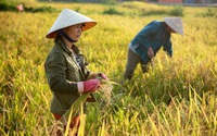 """Đề xuất chuyển đổi linh hoạt 300.000ha đất trồng lúa, GS Võ Tòng Xuân: Đừng """"bắt"""" nông dân chỉ trồng lúa"""