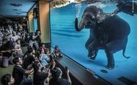 Những tác phẩm chiến thắng giải nhiếp ảnh động vật hoang dã 2021