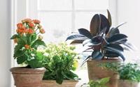 5 sai lầm dễ mắc khi trồng cây cảnh trong nhà, muốn cây xanh tươi phải tránh