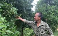 Bắc Kạn: Trồng loài cây cho hoa thơm lừng, xã vùng cao khá giả, về đích nông thôn mới