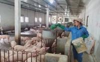 Giá heo hơi chạm đáy nhưng giá thịt heo Việt Nam vẫn cao nhất nhì thế giới, bất thường vậy sao không kiểm tra?