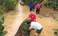 Đồng Nai: Nước lũ tiếp tục lên nhanh, nông dân xã nghèo chồng chất khó khăn