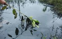 Công an vào cuộc điều tra vụ xả dầu đen kịt ra đồng ruộng ở Hà Nội