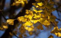 4 cây phong thủy thích hợp trồng ở sân nhà, xua xui xẻo, mang tài lộc cho gia chủ
