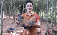Thái Nguyên: Chàng trai 9X nuôi gà ri hoa mơ thả đồi đẹp như tranh, chế biến ra những món ngon lạ miệng