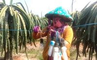 Chống hạn cho vườn cây ăn quả vùng ĐBSCL: Làm ngay việc trữ nước, tích nước