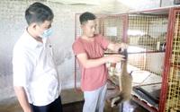 Vĩnh Phúc: Bỏ nghề đầu bếp ở thủ đô, trai trẻ về quê nuôi loài cầy vòi nhiều nhất tỉnh, thu cả tỷ đồng