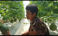 """Hải Dương: Anh nông dân trồng dưa gì mà phải cho cây """"uống"""" sữa bột, chưa kịp bán đã """"cháy hàng""""?"""