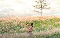 Gia Lai: Tháng 10 về đồi cỏ hồng đẹp mơ màng níu chân kẻ mộng mơ