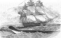 Rồng biển: Huyền thoại và những ghi chép có thật