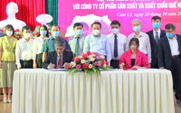 """""""Hai nhà"""" bắt tay hợp tác bao tiêu sản phẩm quế hữu cơ cho nông dân Quảng Trị"""