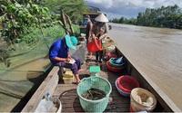Mùa nước nổi Đồng Tháp chưa năm nào chợ cá đồng lại vắng vẻ như năm nay