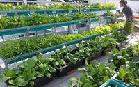 Hướng dẫn trồng rau sạch trong thùng xốp tại nhà cực đơn giản