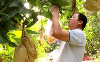 Thị trường Tết Nhâm Dần dự báo khó 'nhằn', nông dân Nam bộ vẫn rục rịch làm trái cây thư pháp