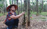 Giá tiêu hôm nay 22/10: Quay đầu giảm mạnh, nông dân trồng tiêu Bình Phước nhận tin vui