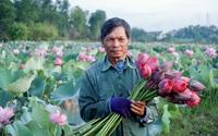 Huế: Nông dân Việt Nam xuất sắc 2021 là nông dân nhân ái, giỏi trồng sen, chơi đàn ghi ta hay nhất vùng