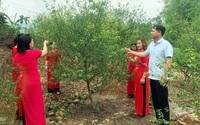 Trồng cây mơ lông, vặt hàng tấn quả đem ủ trong chum, nông dân này của tỉnh Quảng Ninh lãi 1,2 tỷ