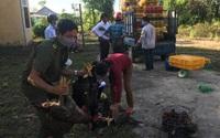 TT-Huế: Hơn 10.000 con gà, hàng chục tấn bưởi của nông dân được bán bởi sự hỗ trợ của Hội Nông dân Phong Điền