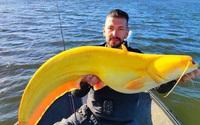 Ngư dân bất ngờ khi bắt được chú cá màu vàng óng, có thể nặng tới 136kg