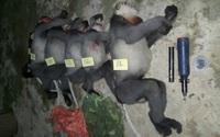 Phó Thủ tướng chỉ đạo điều tra vụ 5 con voọc quý hiếm bị bắn hạ
