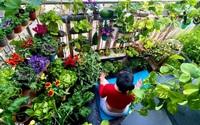 Kinh ngạc với ban công nhỏ xíu trồng rau sạch chật kín của nữ đầu bếp Việt ở Pháp