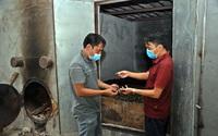Giá cau xuất khẩu sang Trung Quốc tăng cao, một nông dân tỉnh Vĩnh Phúc làm nghề đơn giản này mà thu tiền tỷ