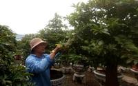 Đặc sản hoa Tết nổi tiếng Sài thành nguy cơ mất thị trường trên đất Campuchia