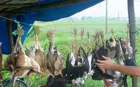 Huế: Yêu cầu xử lý nghiêm cán bộ, công chức ăn thịt chim trời, động vật rừng