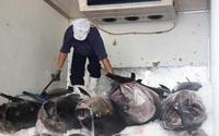 5 loài cá quý hiếm sẽ được bảo vệ đường di cư sinh sản, là những loại gì?