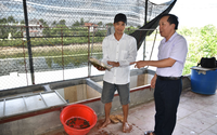 Bắc Ninh: Bỏ nghề hướng dẫn viên du lịch, 8X về quê xây được nhà, mua được 2 mẫu đất nhờ nuôi ba ba