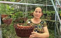 Thái Bình: Bà nông dân trồng hoa lan rừng mà thành tỷ phú, có giò hoa lan quý hiếm giá 200 triệu