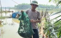 """Thợ săn Thanh Hóa """"thu phục"""" con cáy lông bằng chai nhựa bỏ đi, có người bỏ túi nửa triệu đồng/ngày"""