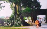 Người làng tôi ở Sài Gòn (kỳ 4): Thế hệ thứ hai