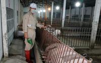 Có thế mạnh nông nghiệp nhưng vẫn chi 3 tỷ USD nhập khẩu thức ăn chăn nuôi