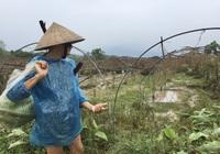 """Hàng trăm ha hoa màu, hoa cây cảnh của dân Đà Nẵng """"bay"""" theo bão số 9"""