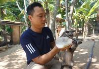 Nhờ nuôi chồn hương, chàng trai Đà Nẵng thu lãi 400 triệu đồng/năm