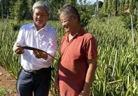 """Cây nha đam giúp nông dân ở Bà Rịa- Vũng Tàu """"đổi đời"""""""