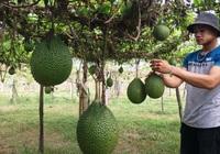 Tiếp cận được nguồn vốn, nhiều hộ nông dân Khánh Hòa đổi đời