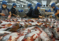 Thaco chuyển nhượng 57 triệu cổ phiếu Thuỷ sản Hùng Vương cho Trưởng Ban Kiểm soát ?