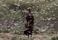 Châu chấu bay phủ kín nhiều cánh đồng tại Châu Phi lọt top ảnh môi trường năm 2020