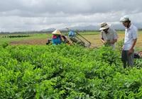 Nhiều giải pháp hỗ trợ giúp nông dân kịp thời sản xuất vụ Đông Xuân