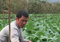 Nông dân Sơn La: Làm giàu nhờ trồng rau sạch