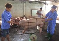Dự kiến cận Tết 2021, người dân mới có thể mua thịt lợn 60.000/kg
