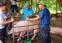 Vì sao Thủ tướng càng chỉ đạo giảm, giá lợn càng tăng?