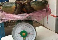 Triệu đồng một con cua biển 'khổng lồ'