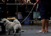 Hậu dịch Covid-19, Trung Quốc cấm người dân ăn thịt chó