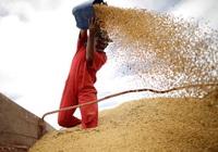 Trung Quốc ngừng mua một số nông sản Mỹ, thỏa thuận thương mại nguy cơ đổ bể