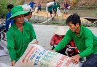 Giữa tháng 6 có kết luận thanh tra xuất khẩu gạo
